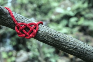 rope, tree, plant, forest, nature, knot