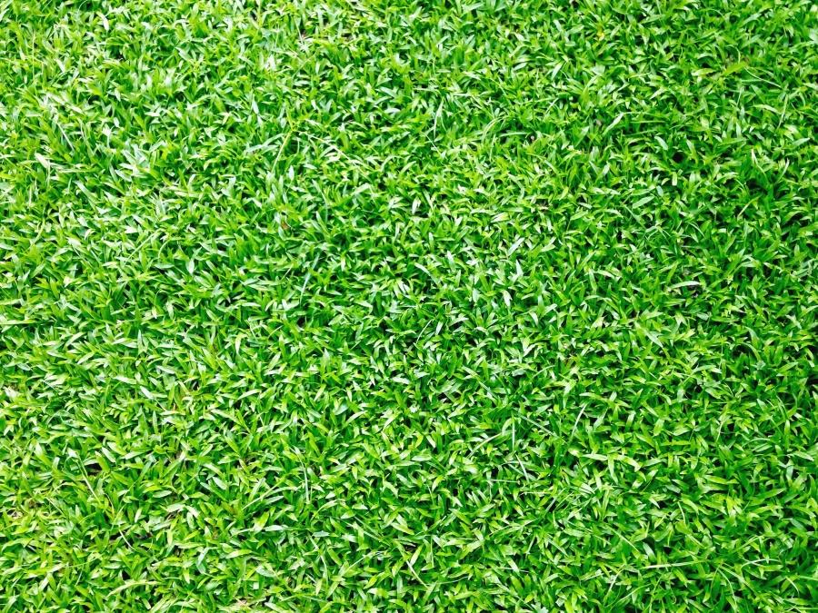 green area, garden, grass, plant, summer, spring, tree, environment, lawn