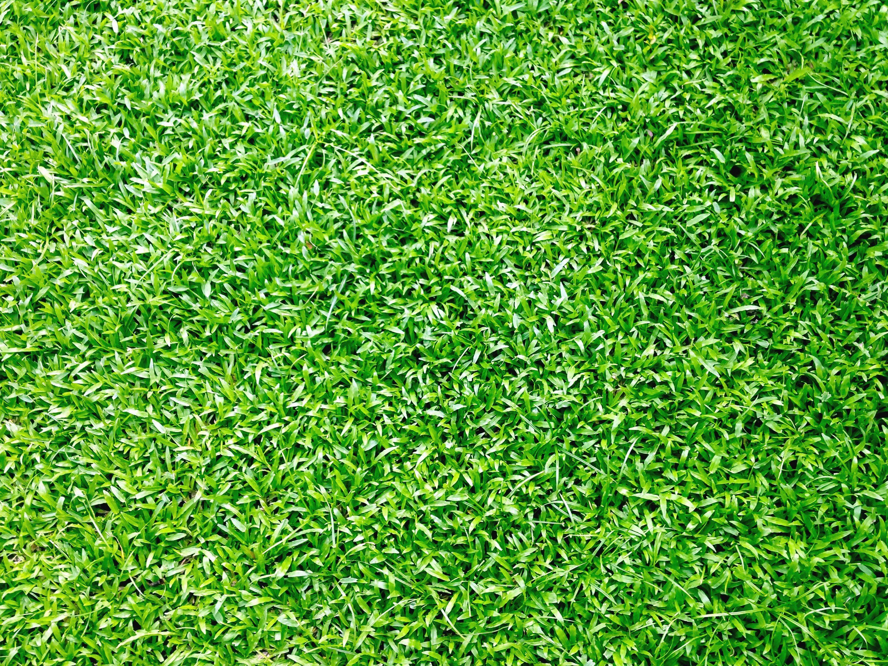 Imagen gratis verde jard n hierba planta verano for Hierba jardin