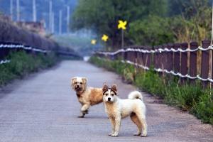 Chien, animal de compagnie, animal, clôture, trottoir, rue, bois, herbe