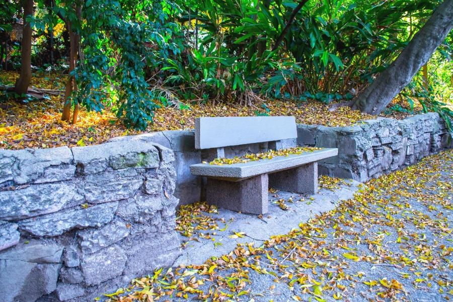 bench, stone, wood, garden, leaf, plant