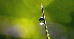 Rocío, agua, planta, reflexión, agua, mojado, hierba