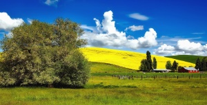 Champ, maison, ferme, agriculture, arbre, nuage, paysage
