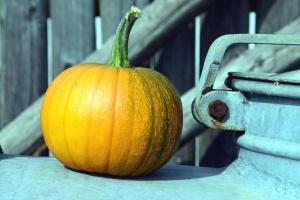 dýně, squash, zeleninu, podzim, jídlo, října, dovolená