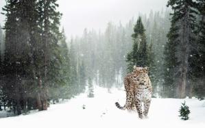 træet, sne, leopard, animal, predator, vinter, landskab