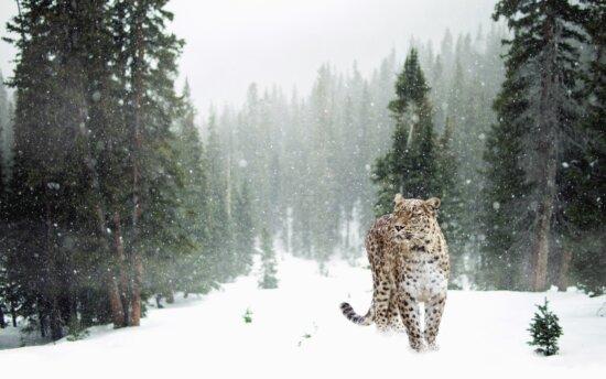 tree, snow, leopard, animal, predator, winter, landscape