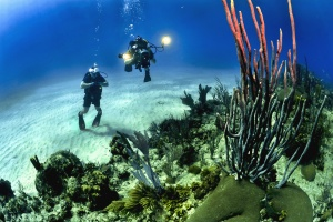 nurek pod wodą, ocean, morze, piasek, wody, algi, kamień