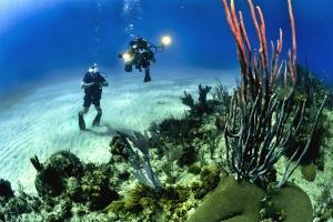 Buceador, submarino, océano, mar, arena, agua, algas, piedra