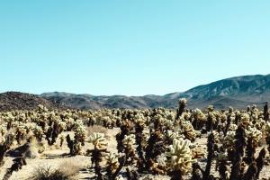 krajina, hory, obloha, údolí, kaňon, cestování, kaktusy, rostliny