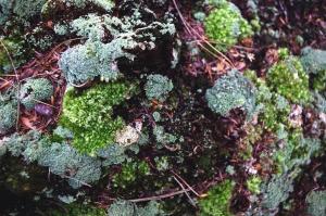 Plante, feuille, fleur, feuille, jardin, naturel, mousse, lichen