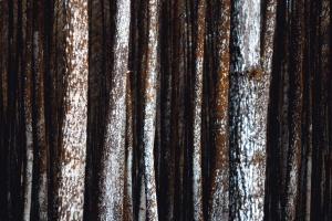 tekstur, pine, materiale, træ, brun, tekstur, bark