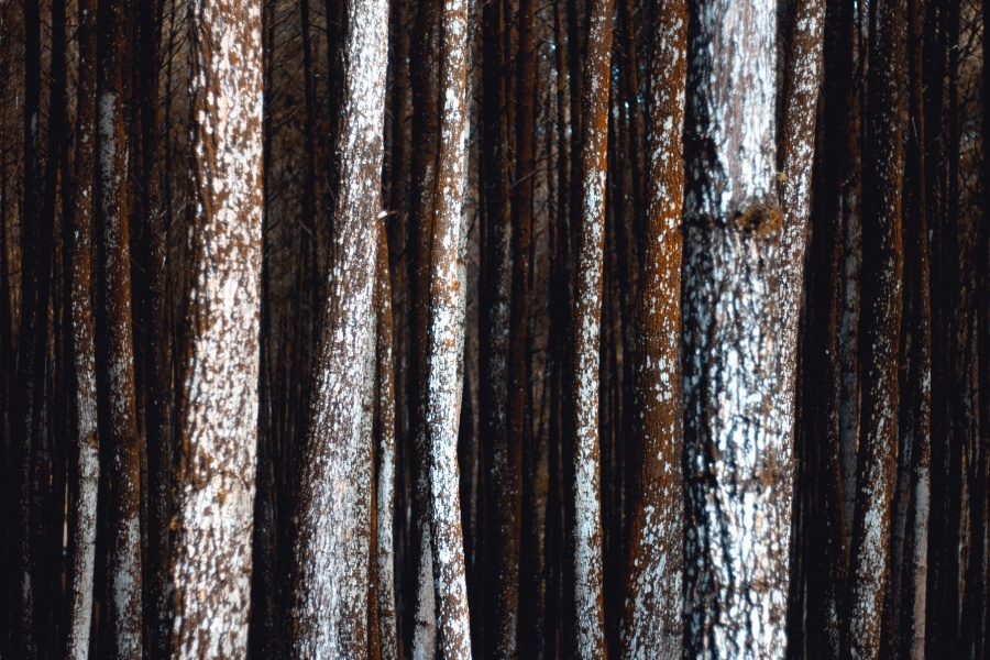texture, pine, material, wood, brown, texture, bark