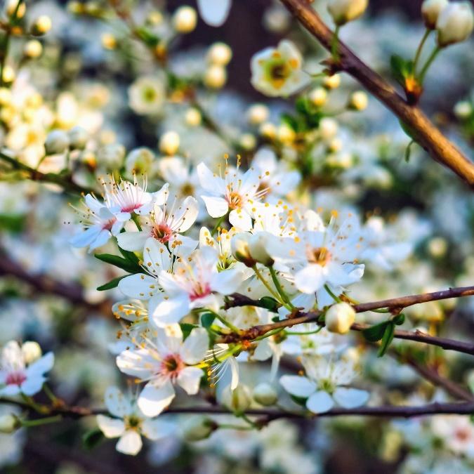 grana, biljka, stablo, list, list, sezona, voće, botanički vrt