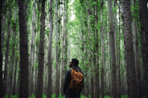 man, backpack, beard, glasses, forest, wood, nature