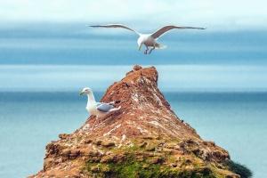 Γλάρος, πετρώματα, πουλιά, ράμφος, φτερό, θάλασσα, νερό
