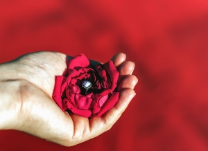 hand, petal, flower, ring, romance, finger