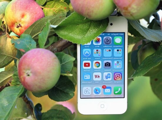 cell phone, technology, program, apple, tree, fruit, branch, leaf