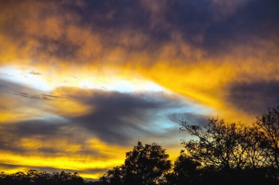 cloud, light, Sun, tree, treetop, branches