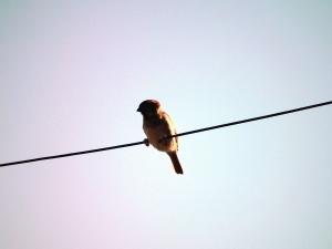 bird, feathers, beak, wire, animal