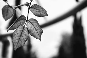листа, дъжд, роса, вода, wet, клон, дърво
