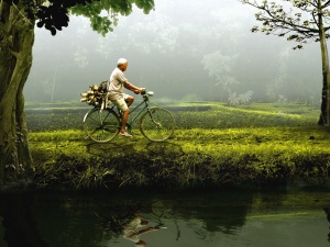man, bicycle, river, tree, grass, reflection