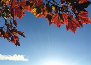 Leaf, stråle lys, sol, anlegg, høst, Sky