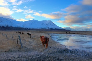 horse, pillar, fences, meadow, mountain, snow, water, frozen, ice