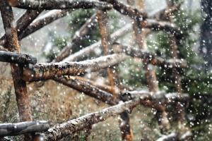 hó, kerítés, fa, hópehely, tél, hideg