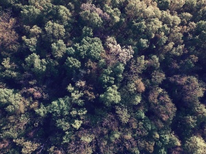 forest, plant, tree, treetop, nature