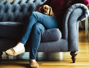 dog, couch, animal, shoe, girl, pants, interior, house