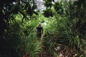 žena, jungle, leaf, strom, cesta, pobočky, rainforest