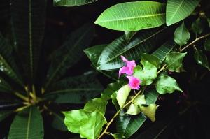 Plante, fleur, pétale, feuille, nature, jardin, branche