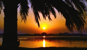 sunset, palm tree, wood, water, plant, river, nature