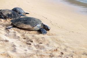 schildpad, zand, dier, reptiel, zeeschildpadden, water, armor