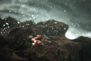 Rosa, fiore, foglia, bouquet, rocce, acqua, pioggia