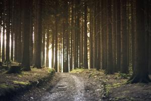 road, tree, stump, wood, nature, branch