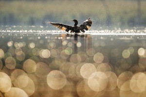 bird, feather, water, beak, animal, splash, drop, river