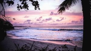 Puesta del sol, palma, árbol, arena, mar, cielo