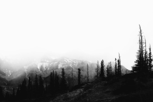 forest, mountain, tree, fir, conifer, snow, fog, landscape