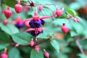 květina, rostlin, listů, zahrada, příroda, okvětní lístky