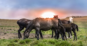 horse, foal, animal, farm animal, meadow, sun, grass