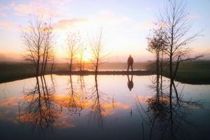 ember, tó, tó, víz, fa, sun, fű, természet