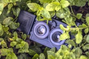 camera, spy, leaf, plant, lens