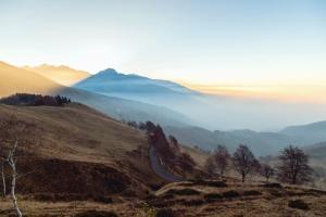 Road, strom, hory, hmla, letný, dawn