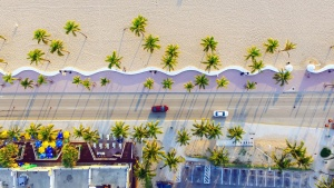 palm tree, sand, coast, road, car, house, building