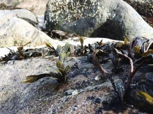 plant, leaf, rocks, nature, moss