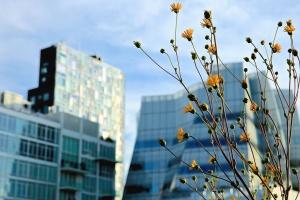 kvetina, kvitnúce, lupienok, stonky, rastlín, budovy, architektúra