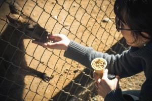 кенгуру, зоопарк, момиче, зърно, храни, животни