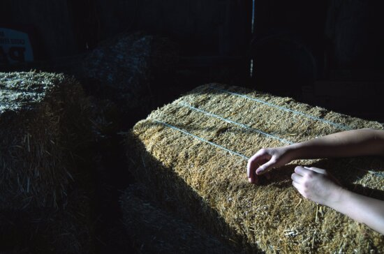 hands, straw, rope, hand, agriculture, barn