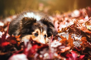 dog, leaf, autumn, forest, domestic animal, pet